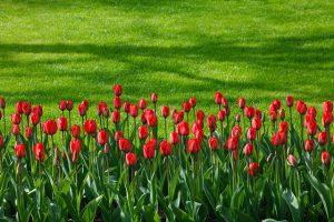 fleurs conte indien